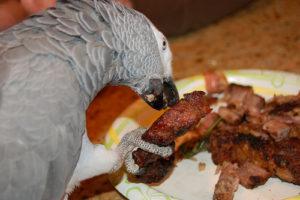 Les Aliments Qu Il Ne Faut Pas Donner A Un Perroquet Bien S Occuper De Nos Animaux Et De Leur Nutrition