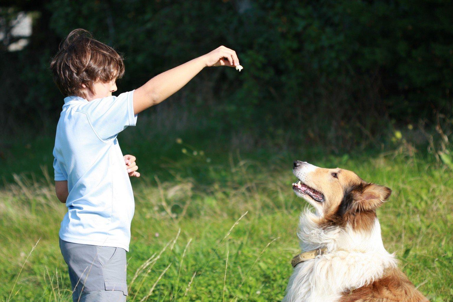 Bien s'occuper de nos animaux et de leur nutrition